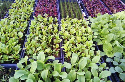 plant-csa-425.jpg