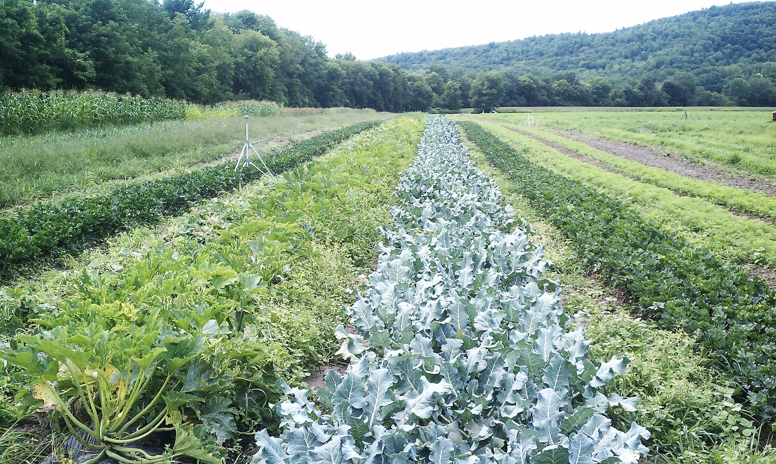 more summer crops