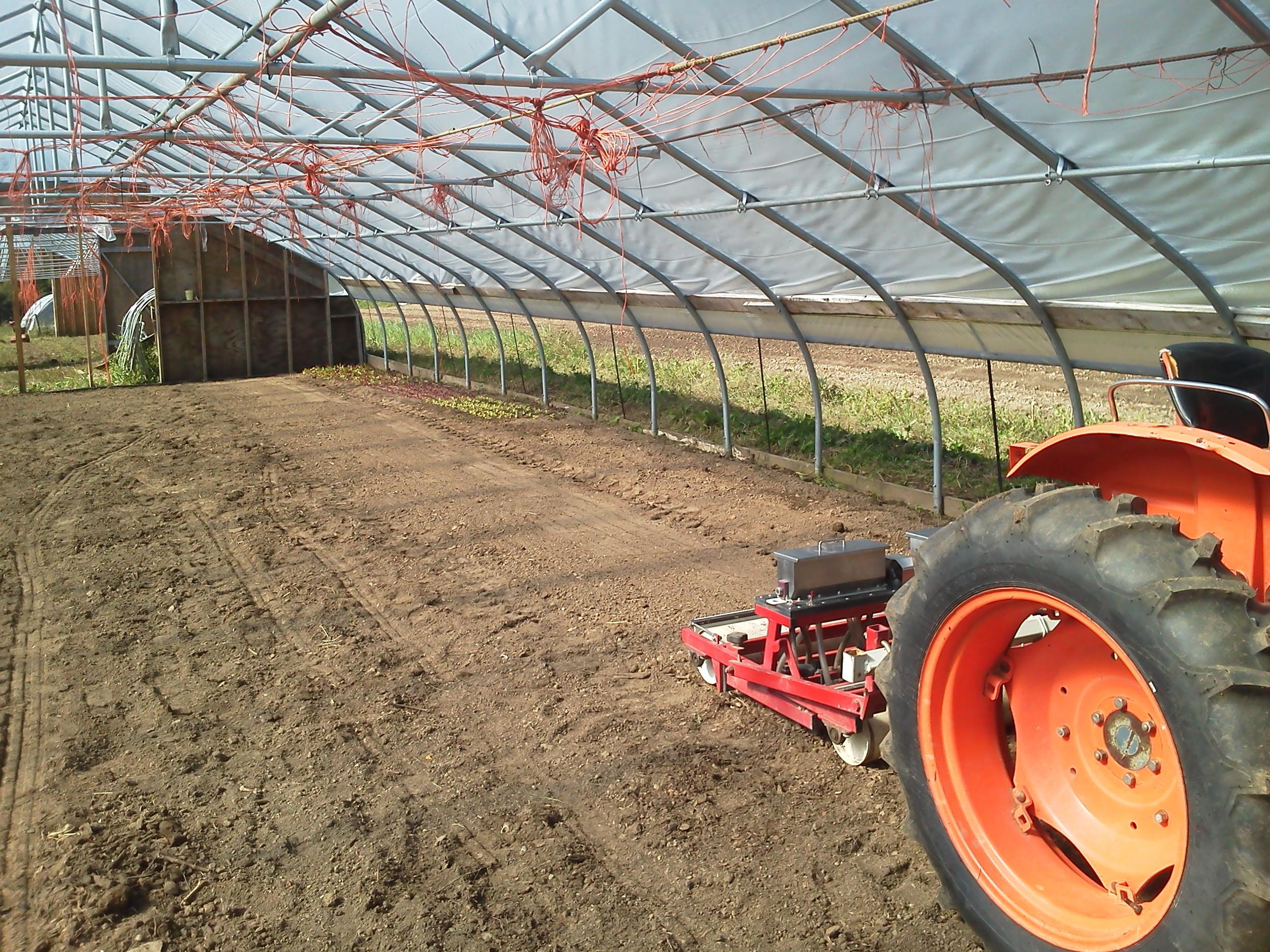 Seeding winter greens