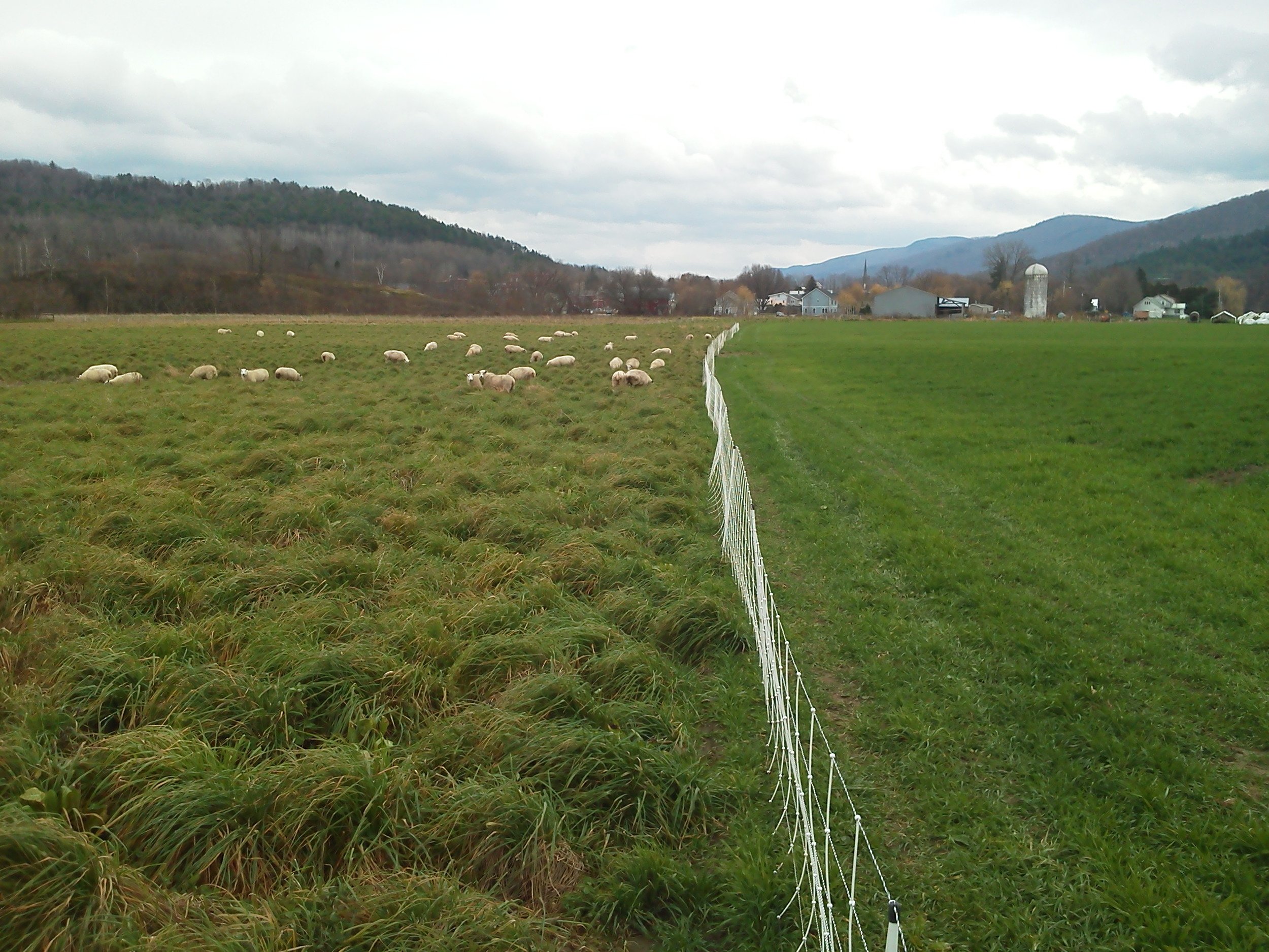 grazing & cover crops