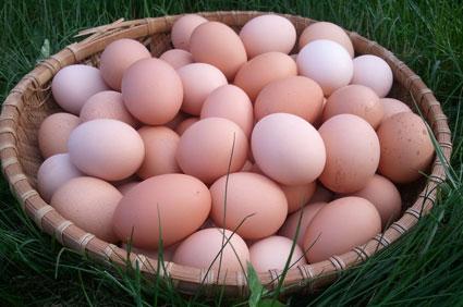 Eggs-Basket.jpg