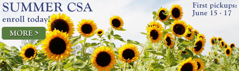 Summer-homepage4.jpg