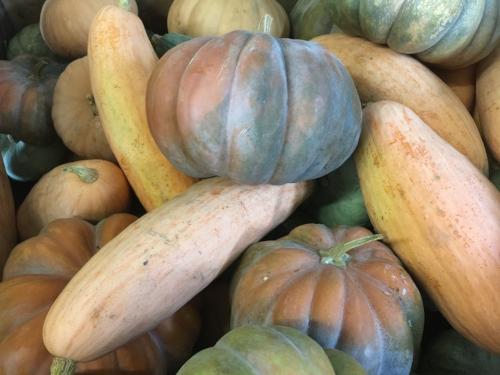 Heirloom pie pumpkins in storage at JSF