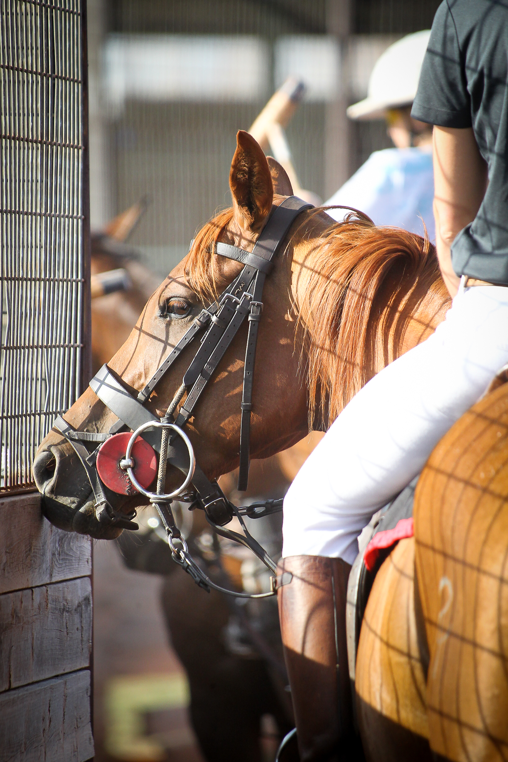 LEARN TO PLAY POLO - No riding experience necessaryHorse and polo equipment includedJunior and AdultPrivate and group lessons available