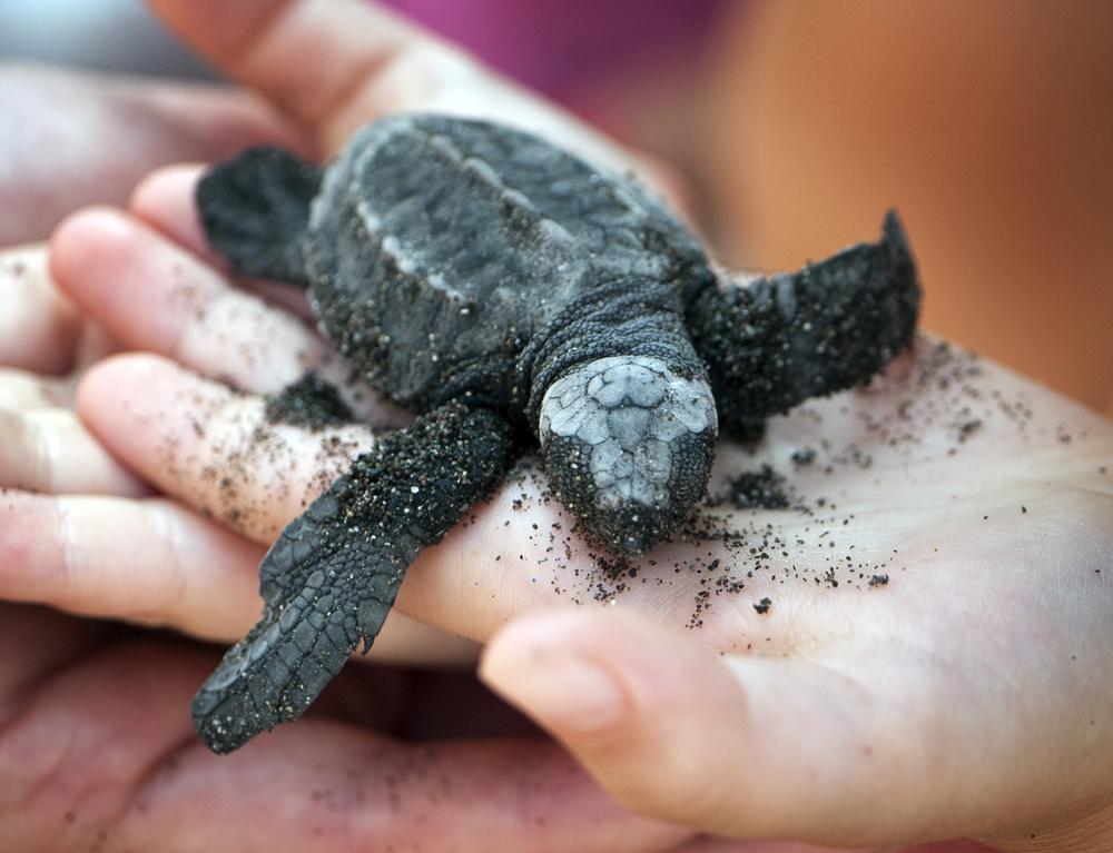 Turtles004A.JPG