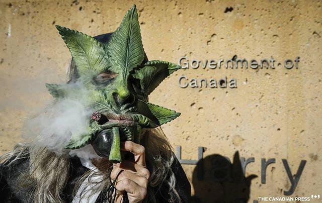 Legalized pot...welcome to Canada . . . . . #canada#marijuana#legalization#cannabis #YYC #calgary #cdnpress @cdnpress #cdnpoli #legalcannabis #canadacannabis #weedwednesday