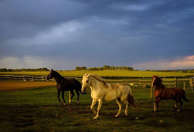 Minutes before the storm · · · · · #Fuji #fuji #fujifeed #fujixseries  #fujilove #fujinon #fujifilmxseries #fujix #fujix100f #myfujifeed #fujifilmx100f #fujifilmph #fujifollowme #horse #horses #horsepower #horsesofinstagram #horselover #horsestagram #horsephotography #horselovers #horseofinstagram #horseoftheday #horsesofig #horseart  #greatlight #reportagespotlight @travelalberta @_fujilove_