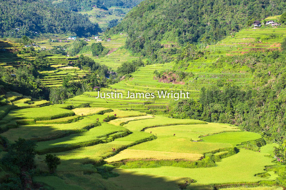 Hapao Rice Terraces, Banaue, Ifugao, Philippines    A UNESCO World Heritage Site   Philippine Photo # 4119  If you wish to purchase a photography print of this image, or would like to license this image please contact us using the form below.  Please kindly include the Image Title and Image Ref # in your message, we will get back to you.