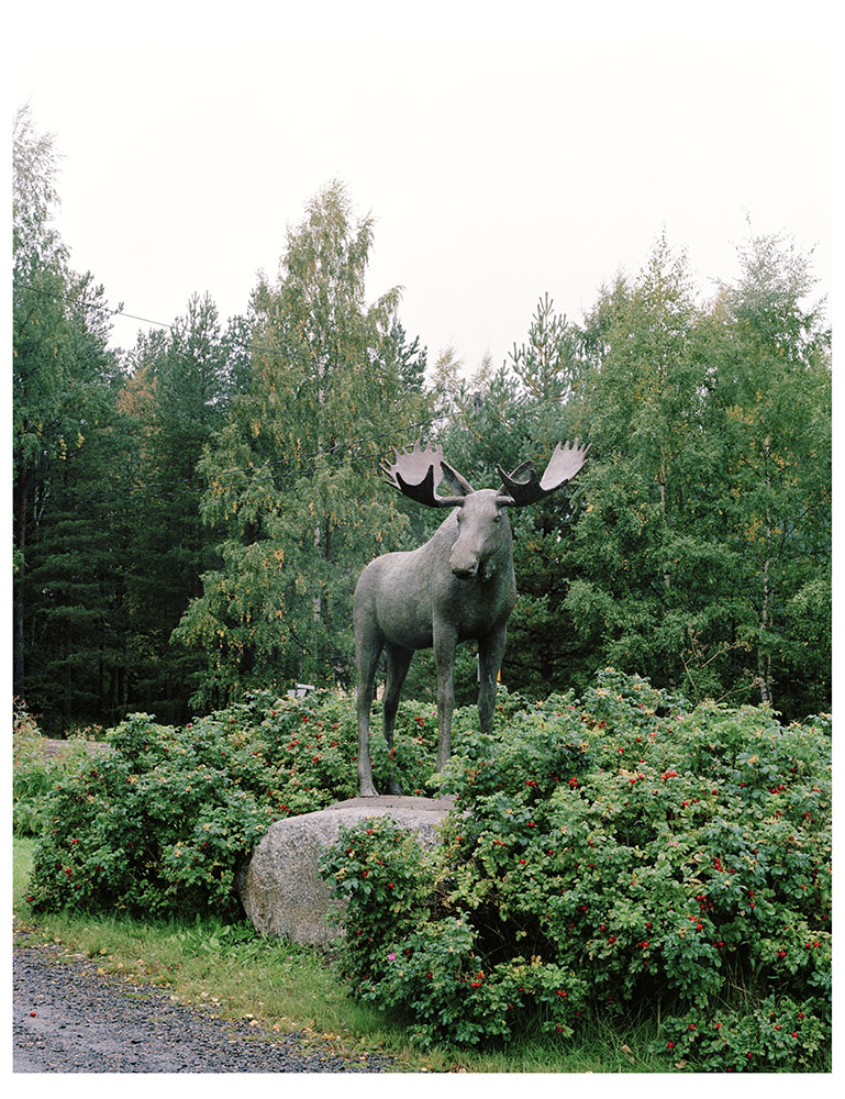 Thomas Humery, photography, Moose, Finland, 2005