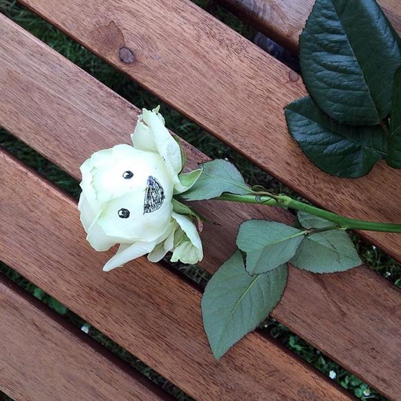 A happy Hay Festival rose!