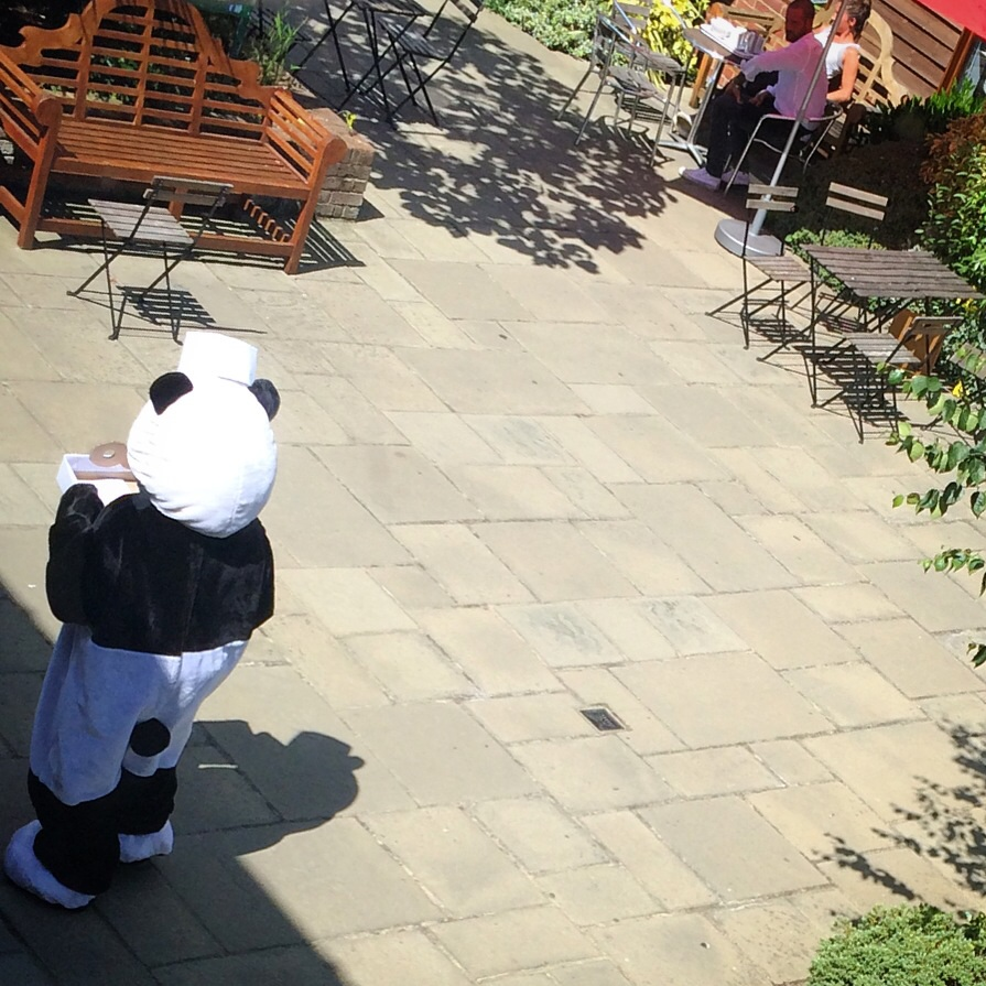 Mr Panda's on the loose! I wonder what that man is thinking, over there.