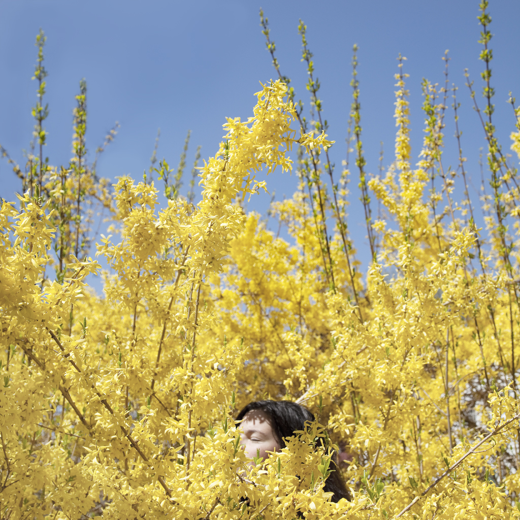 Claire in the Forsythia, Rockport, Maine, 2010