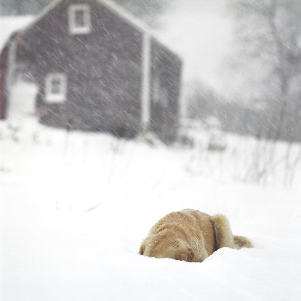 Scarlet in the Snow, Rockport, Maine, 2009