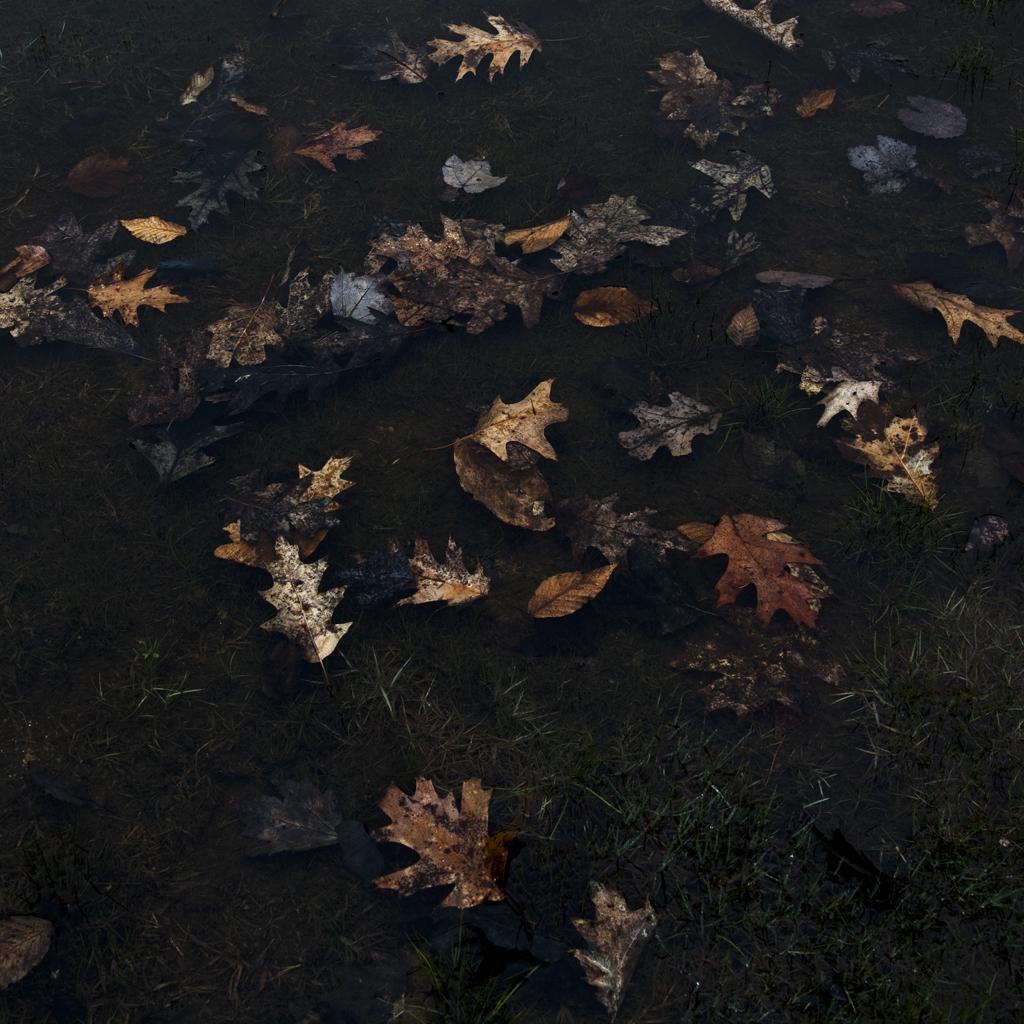 Leaves, 2012