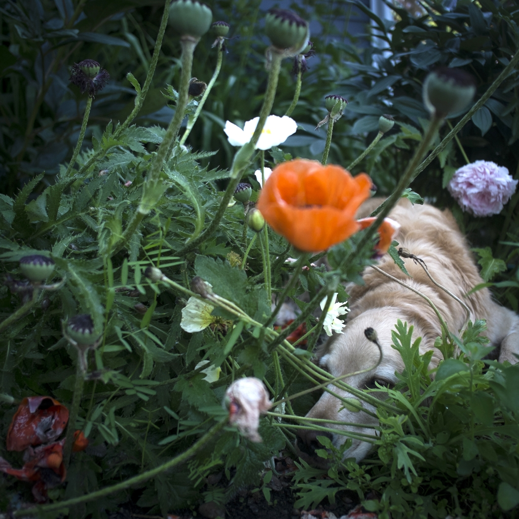 Scarlet & The Poppies, 2014