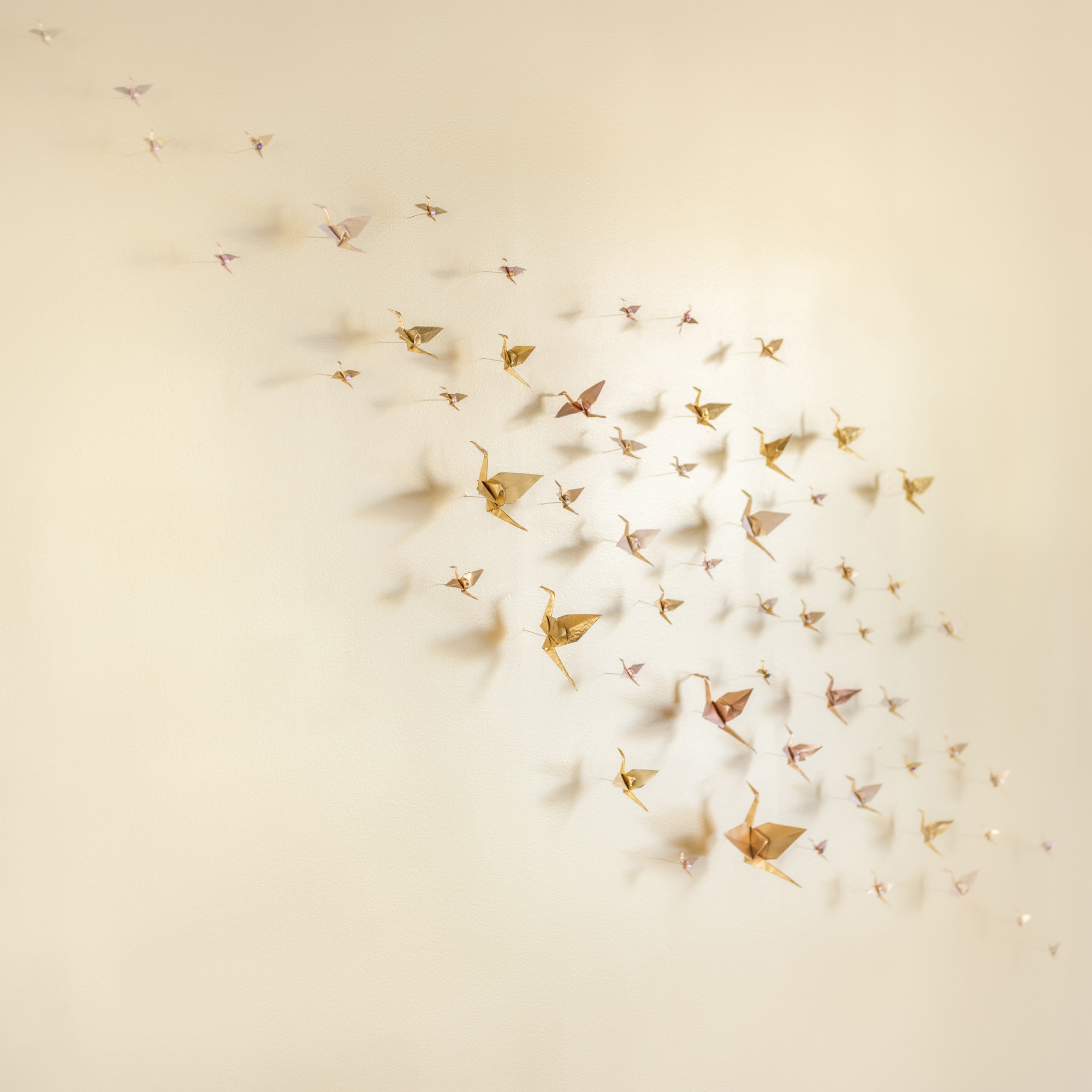 A Siege of Cranes, 2015