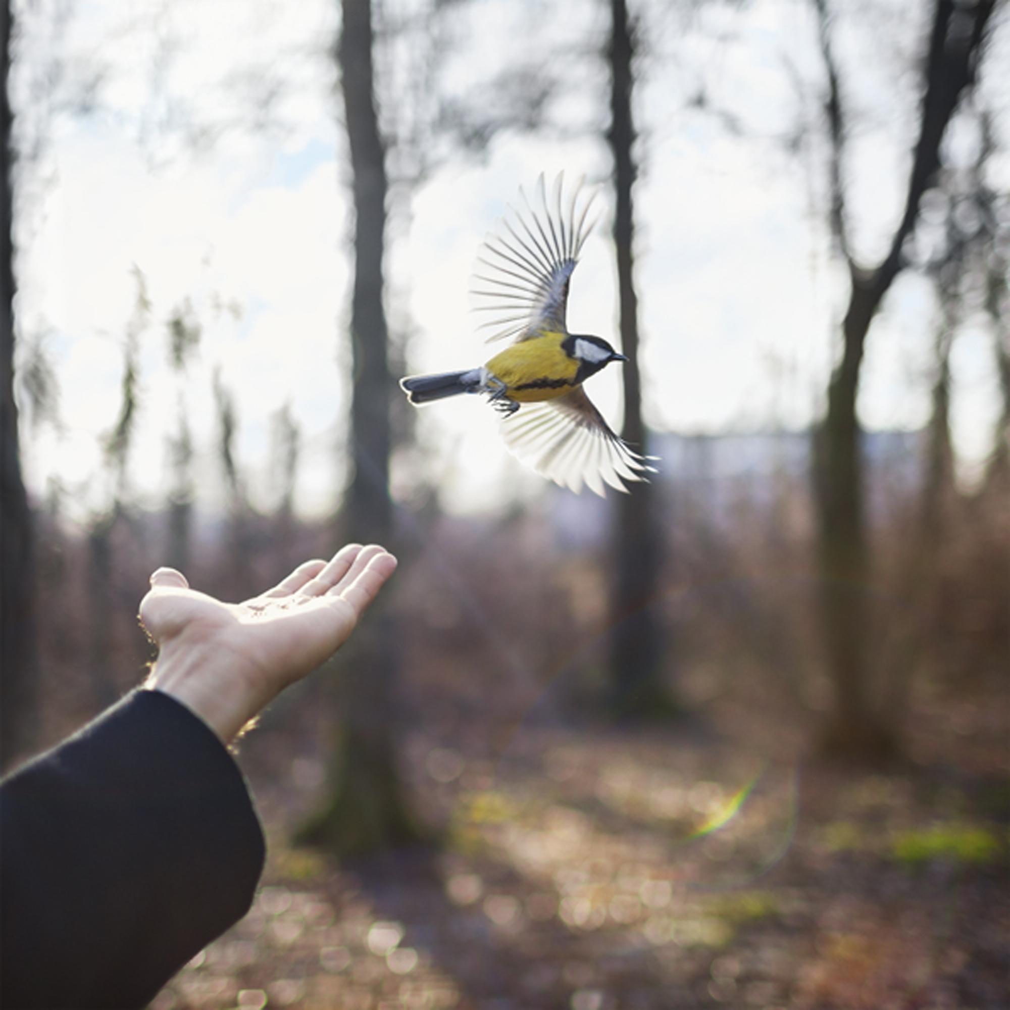 Goldfinch, 2014