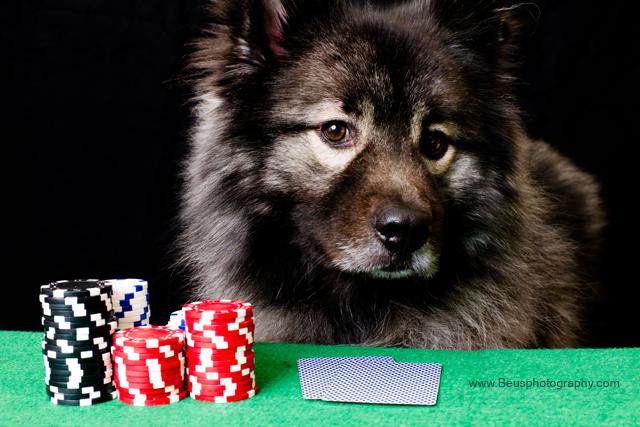 Bogosse_poker-4_web.jpg