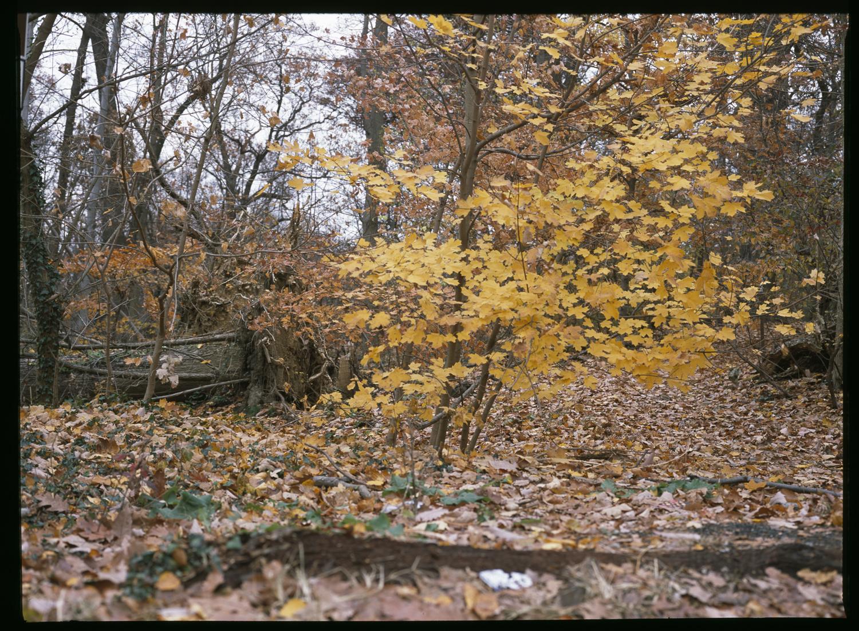01_yellowtrees.jpg