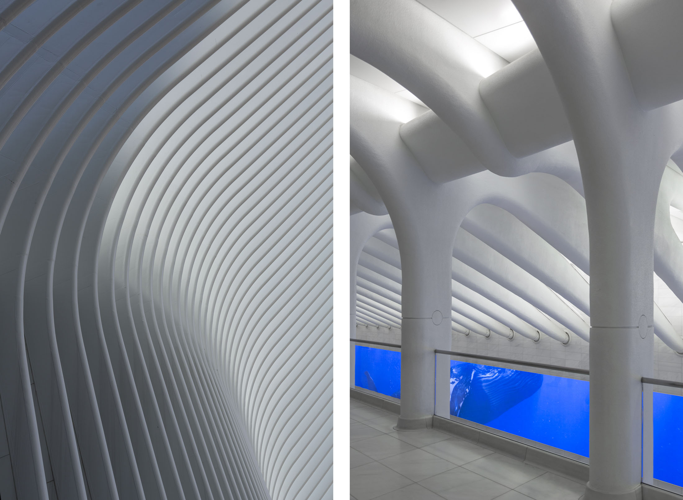 The Oculus, WTC  New York NY  Santiago Calatrava
