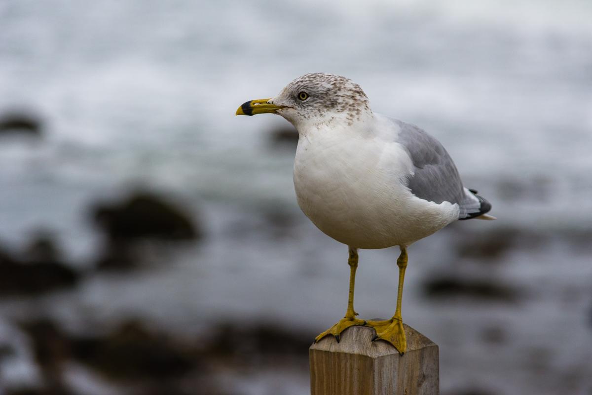 Rhode Island, November 2014, Nikon DSLR