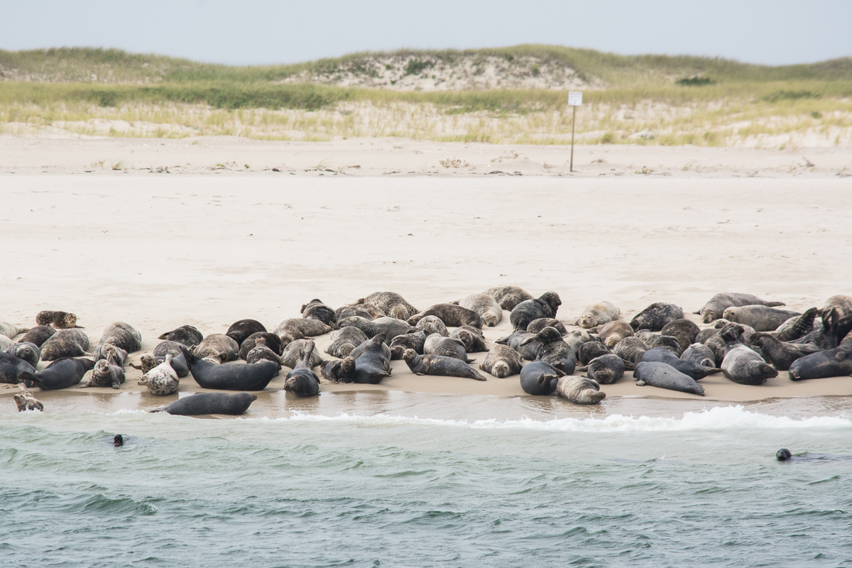 Cape Cod National Sea Shore, September 2014, Nikon DSLR