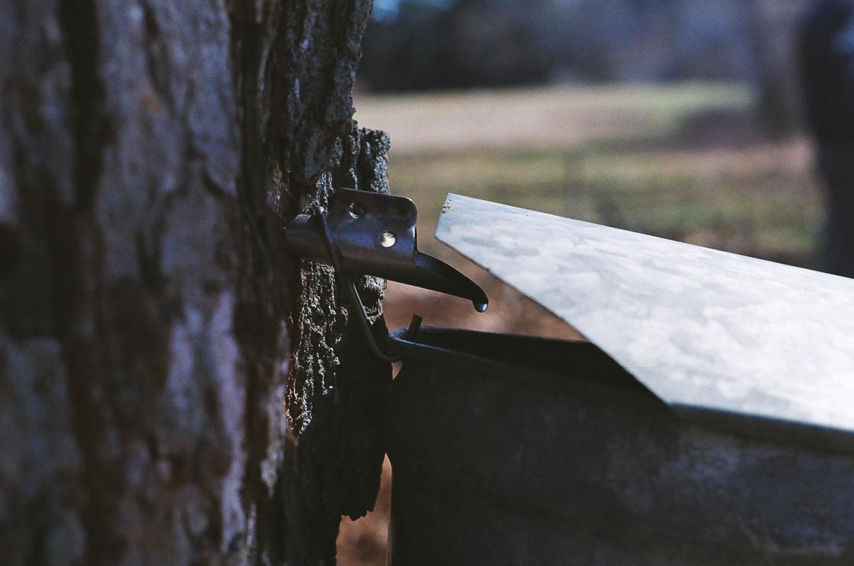 Brookwood Community Farm, MA  March 2016  Canon 35mm SLR  Kodak Film
