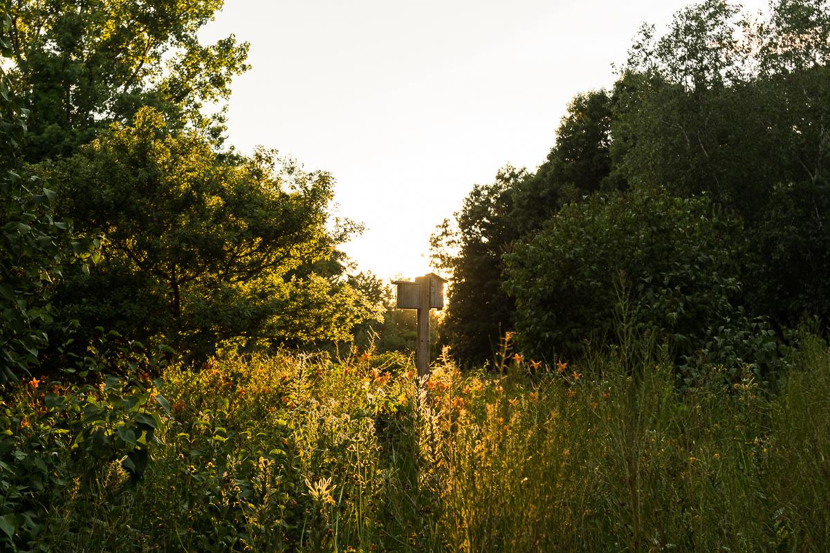 Hingham, MA  Summer 2016  Nikon DSLR