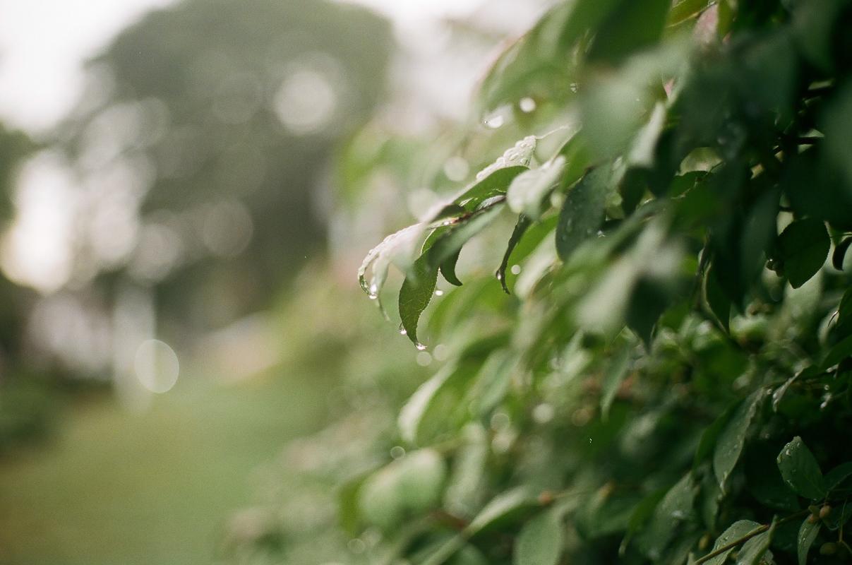 Braintree, MA  September 2016  Canon 35mm SLR  Kodak color film