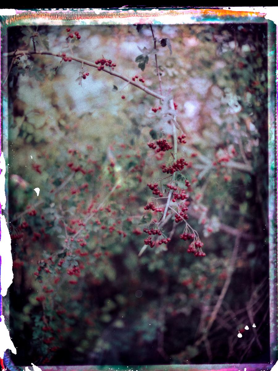 film_photography_414.jpg