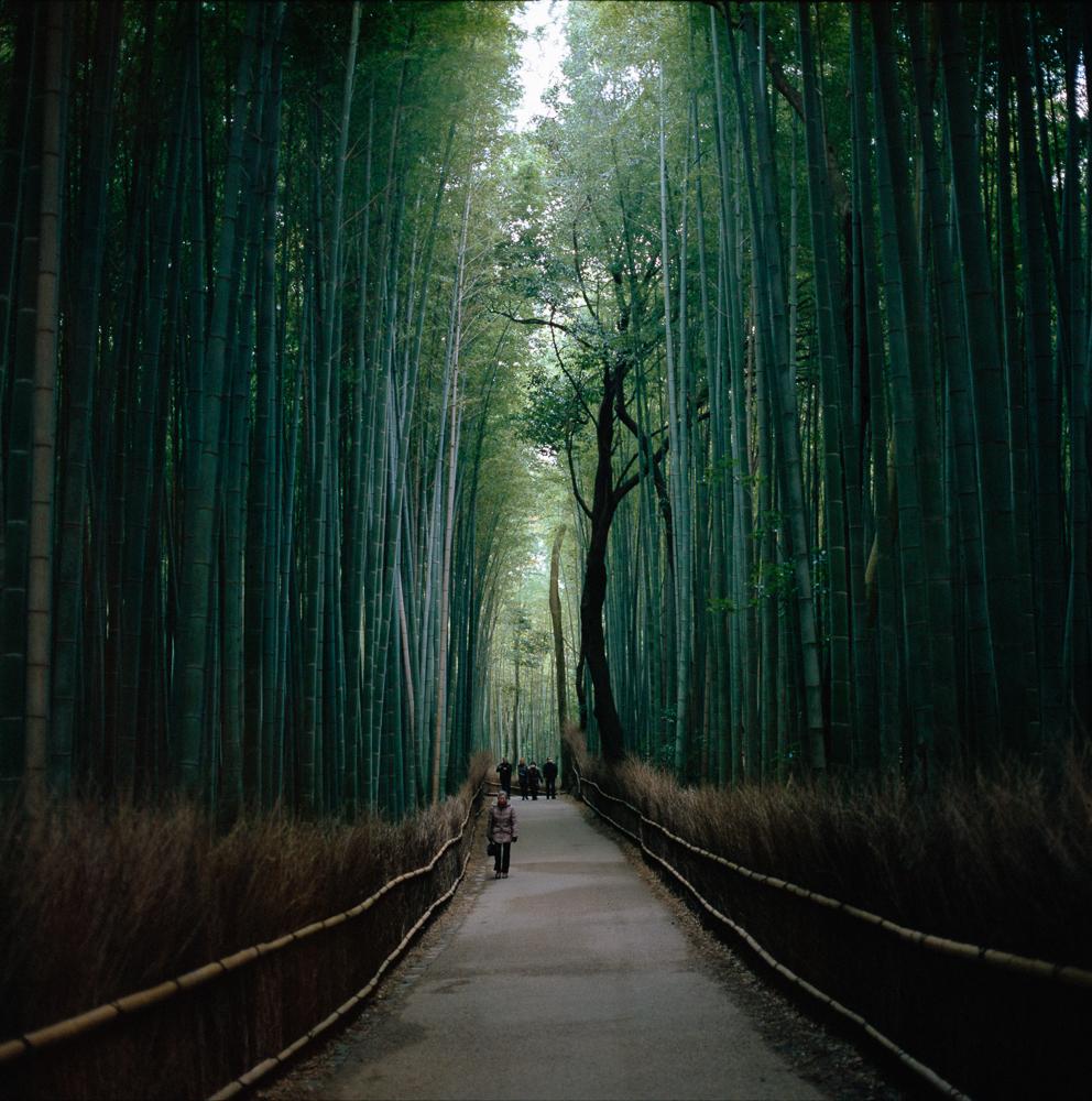 Arashi-yama bamboo path