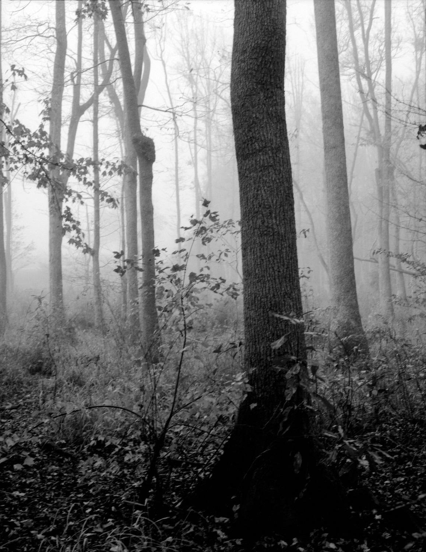 river trail trees 1 resize.jpg
