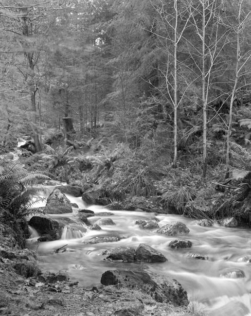 Dodd Wood Stream