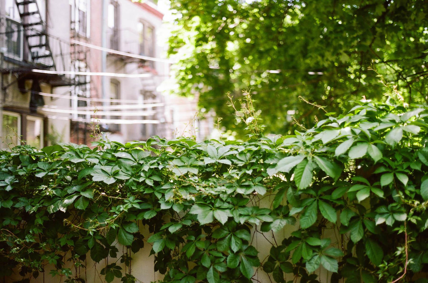 Brooklyn Backyard | Olympus OM1 and Zuiko 50mm f1.8 | Shawn Hoke