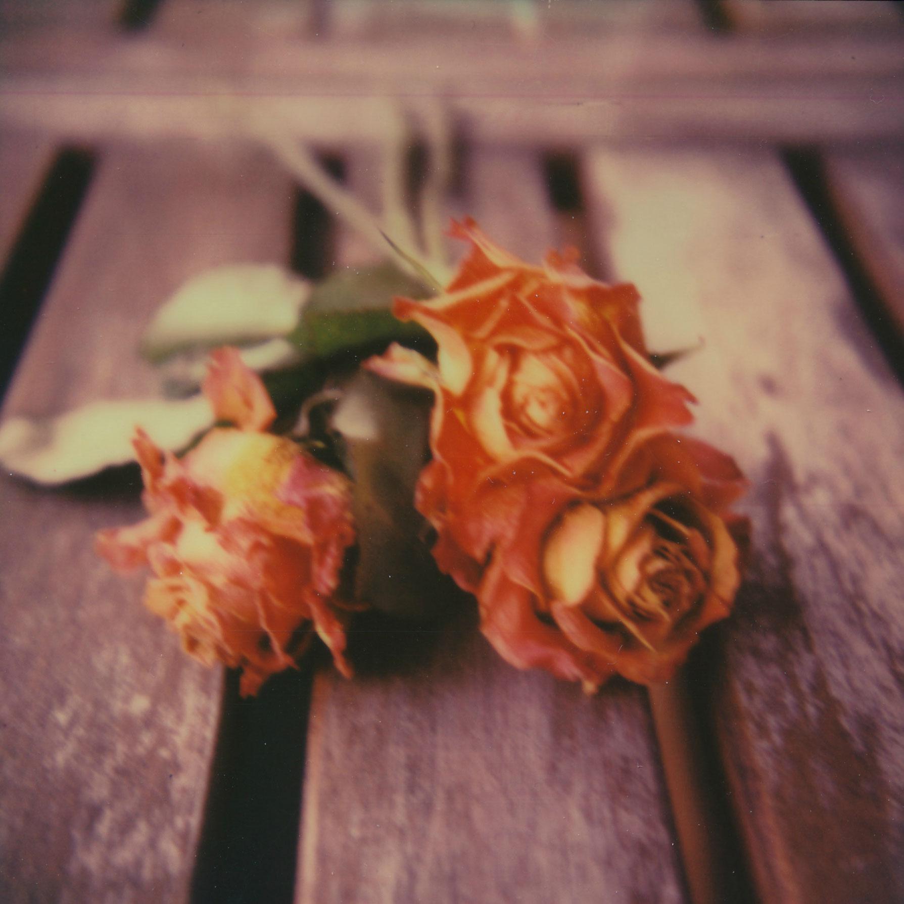 roses_sx70_sarahbucher.jpg