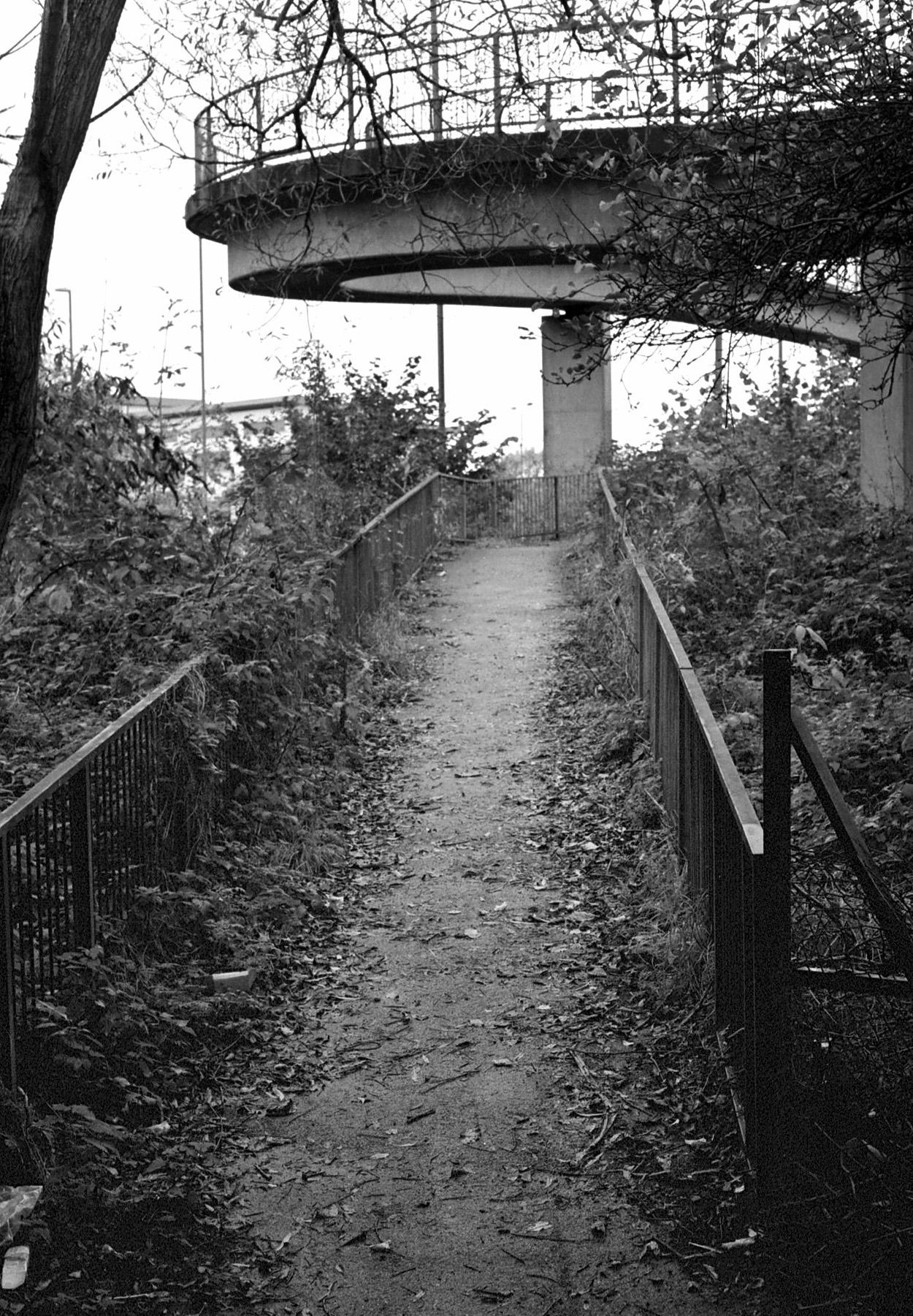 Overgrown | Canon FTBn 50mm | John Marriott