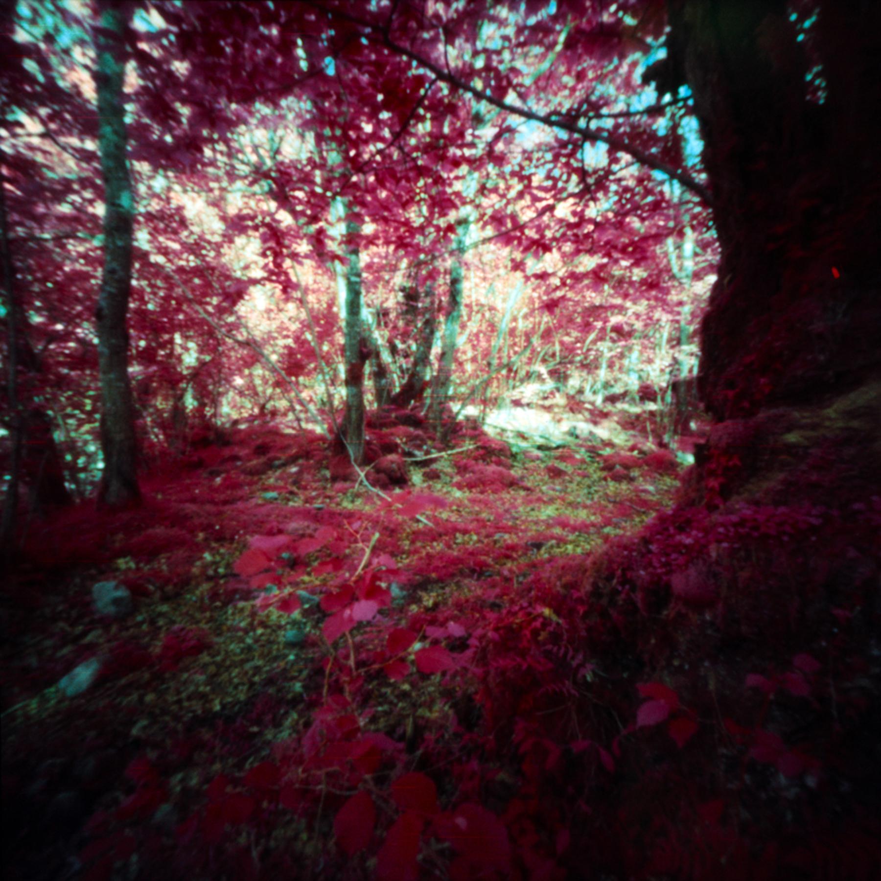 Woods in Red  Digna 6x6 Pinhole  Kodak EIR Aerochrome  Jesús Joglar