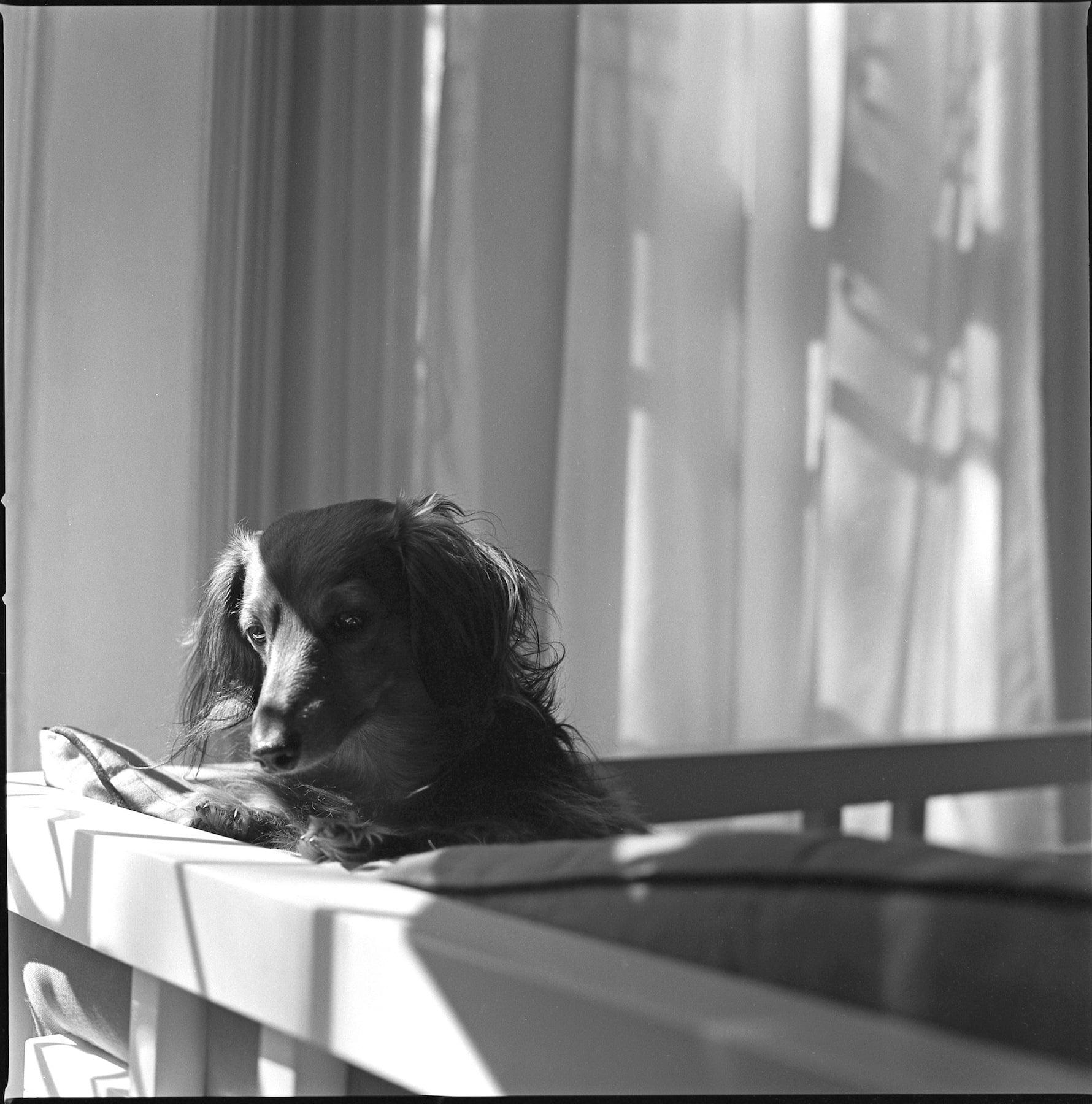 Chloe Contemplating | Hasselblad 501cm | Zeiss 80mm f2.8 | Kodak Tri-X 400 | Shawn Hoke