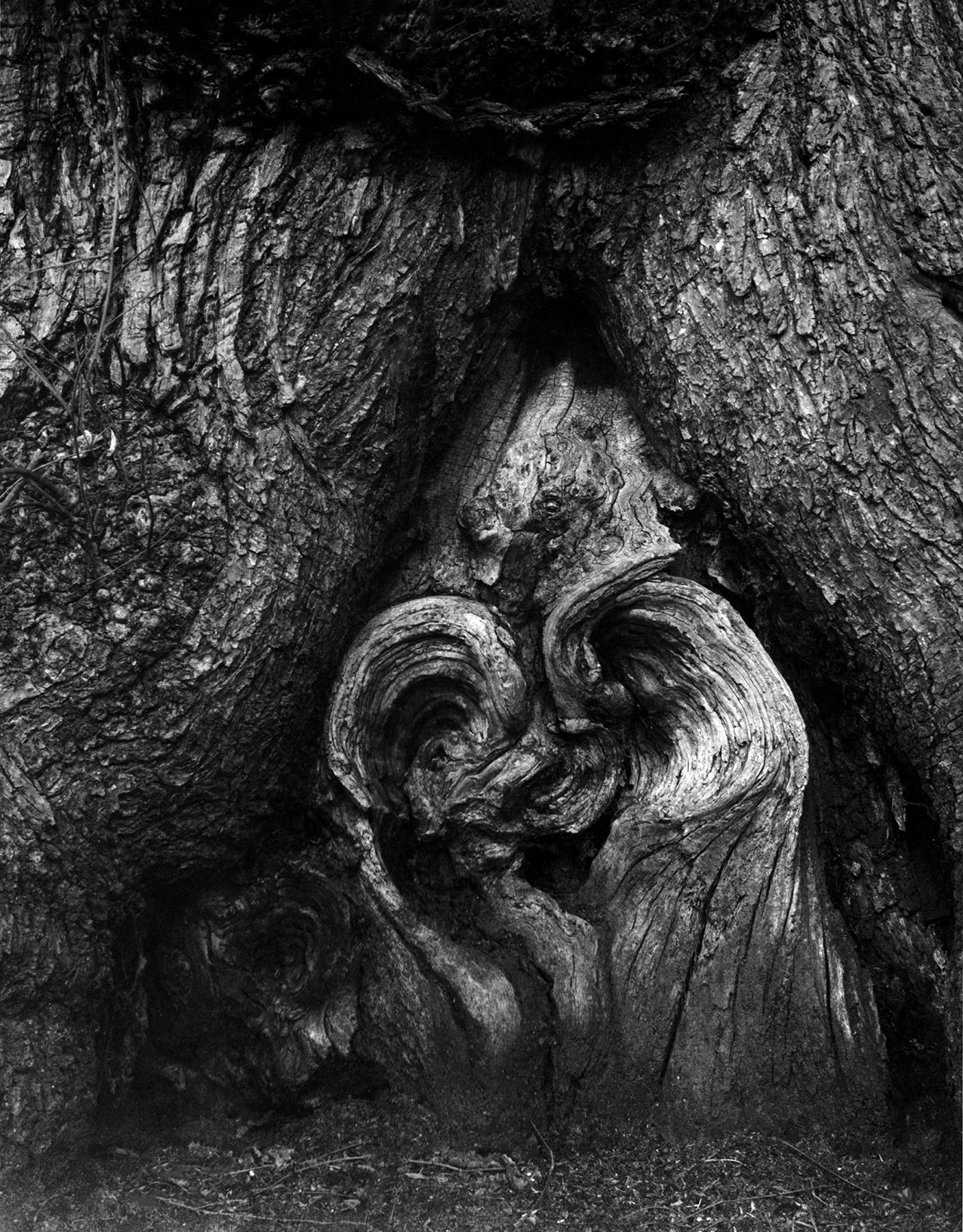 Heart Of Oak | Linhof and Schneider 135mm | Karen Thurman