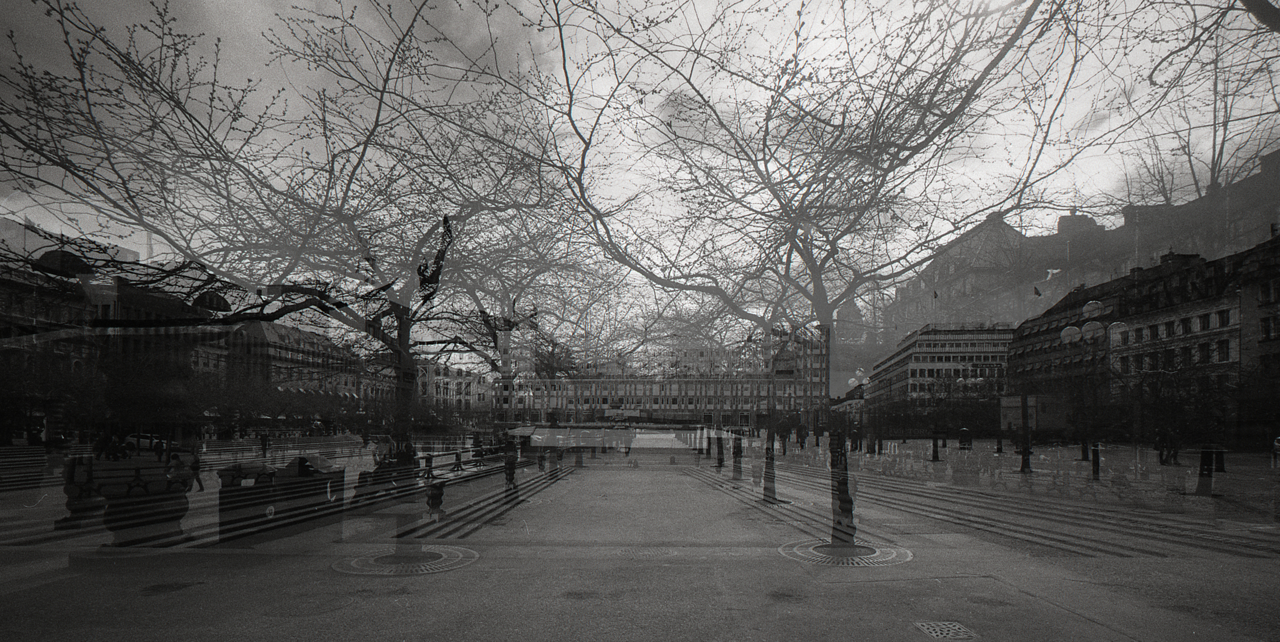 N Thomas Meldert  urban forest  Zeiss zm 15 mm