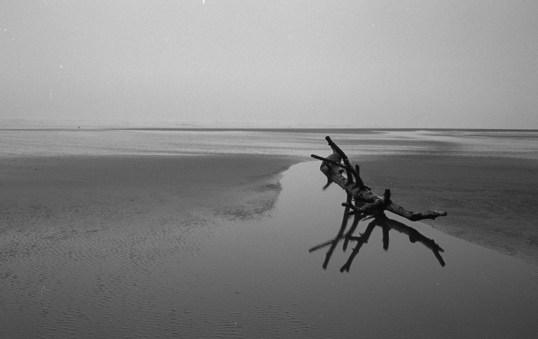 Morning Peace | Canonet QL17 2 TriX400 | HW Kateley