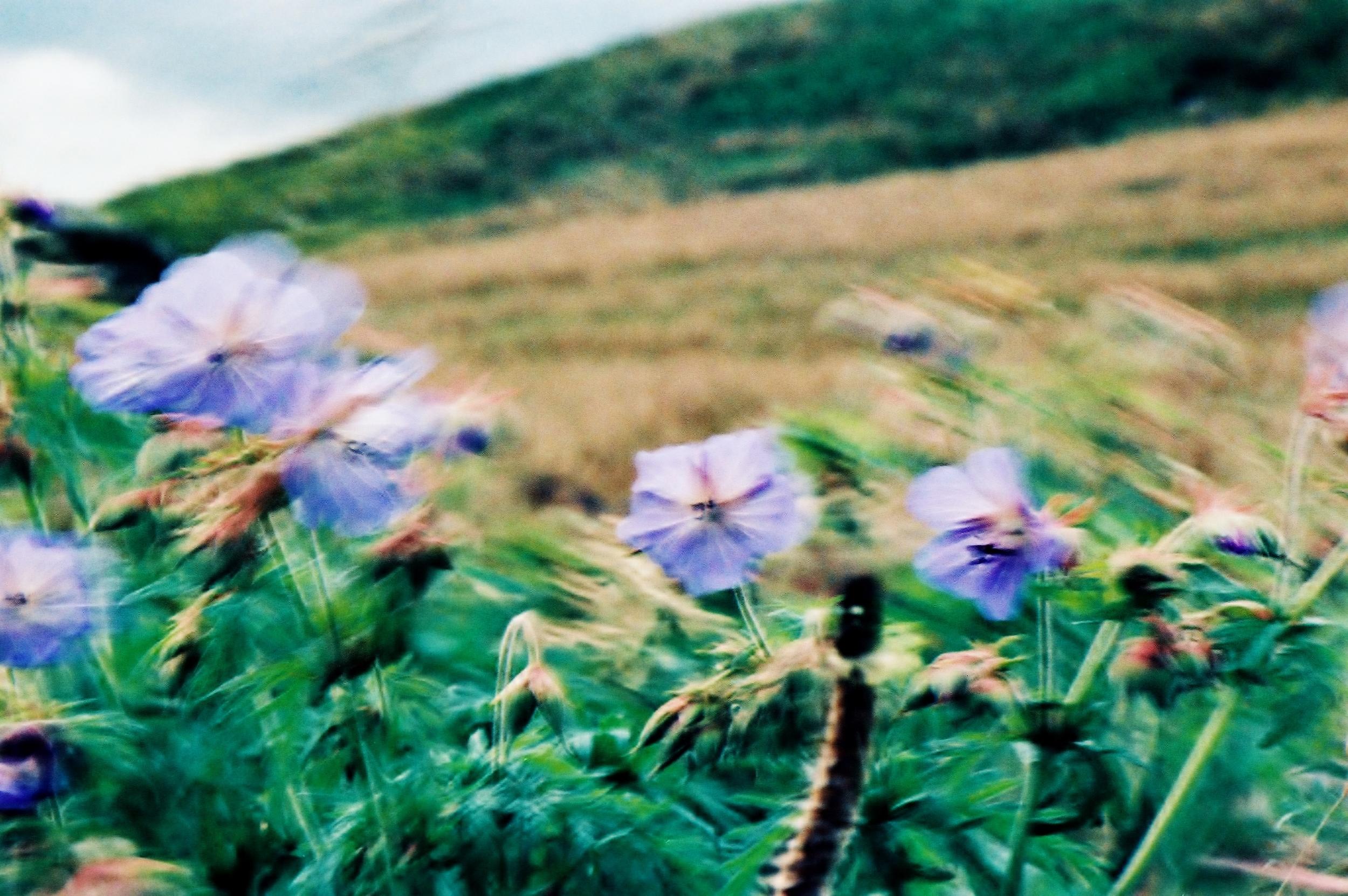 untitled | F90x | Sensia II xpro | Lucy Wainwright
