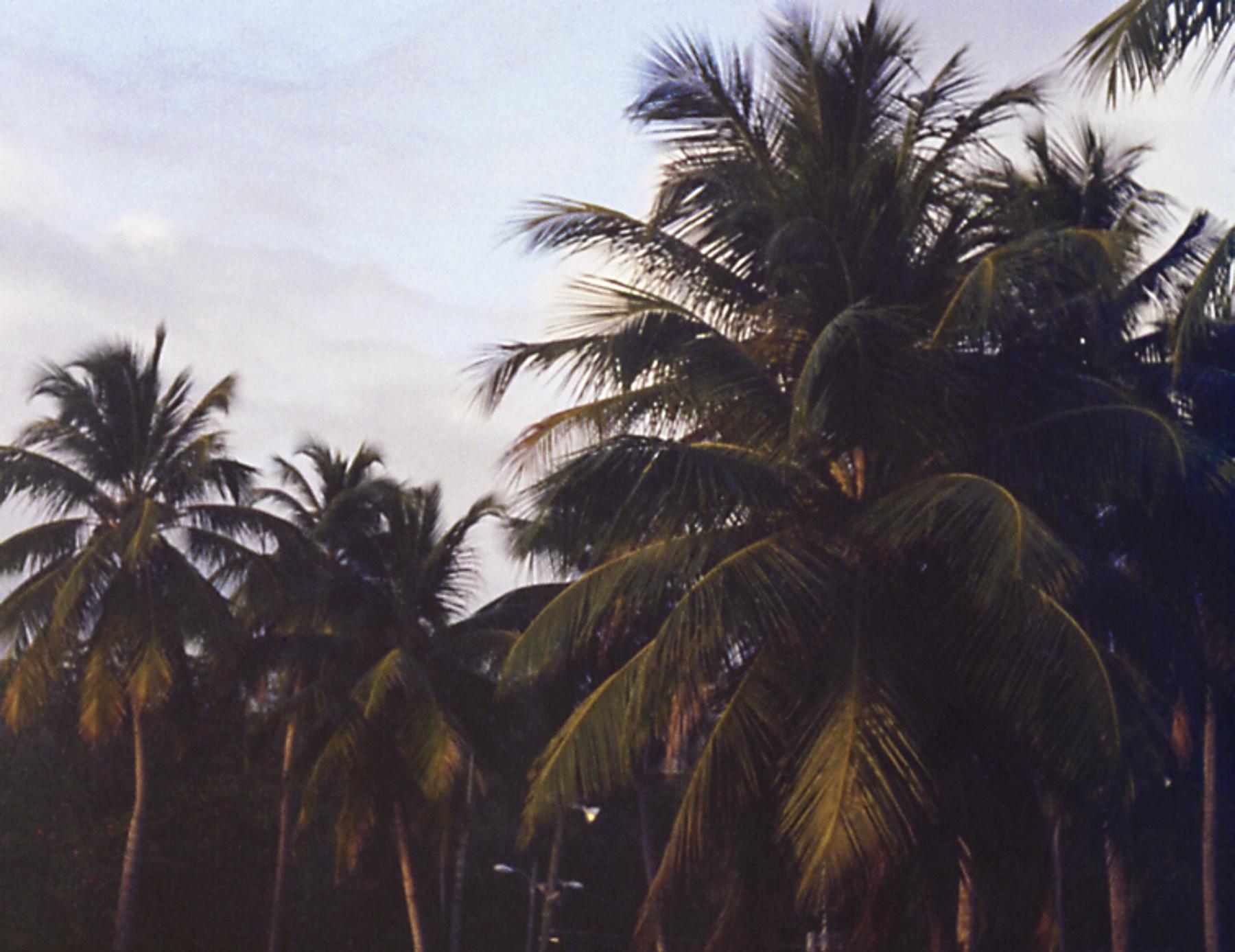 Ana Rosa Sáez | Palm trees | Olympus Pen FT