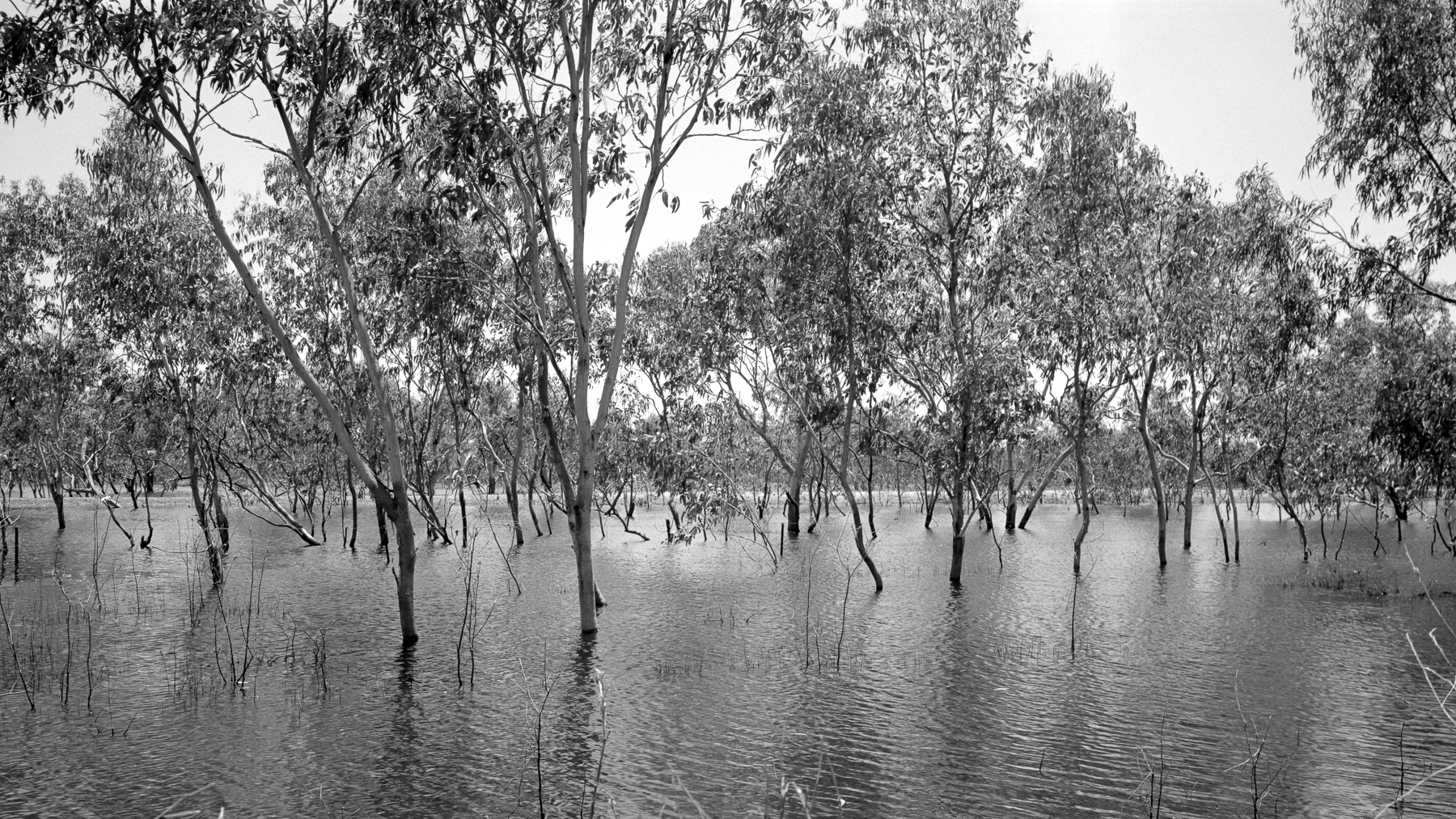 Wetland | fuji GW690III | Neopan Acros | Greg Williamson
