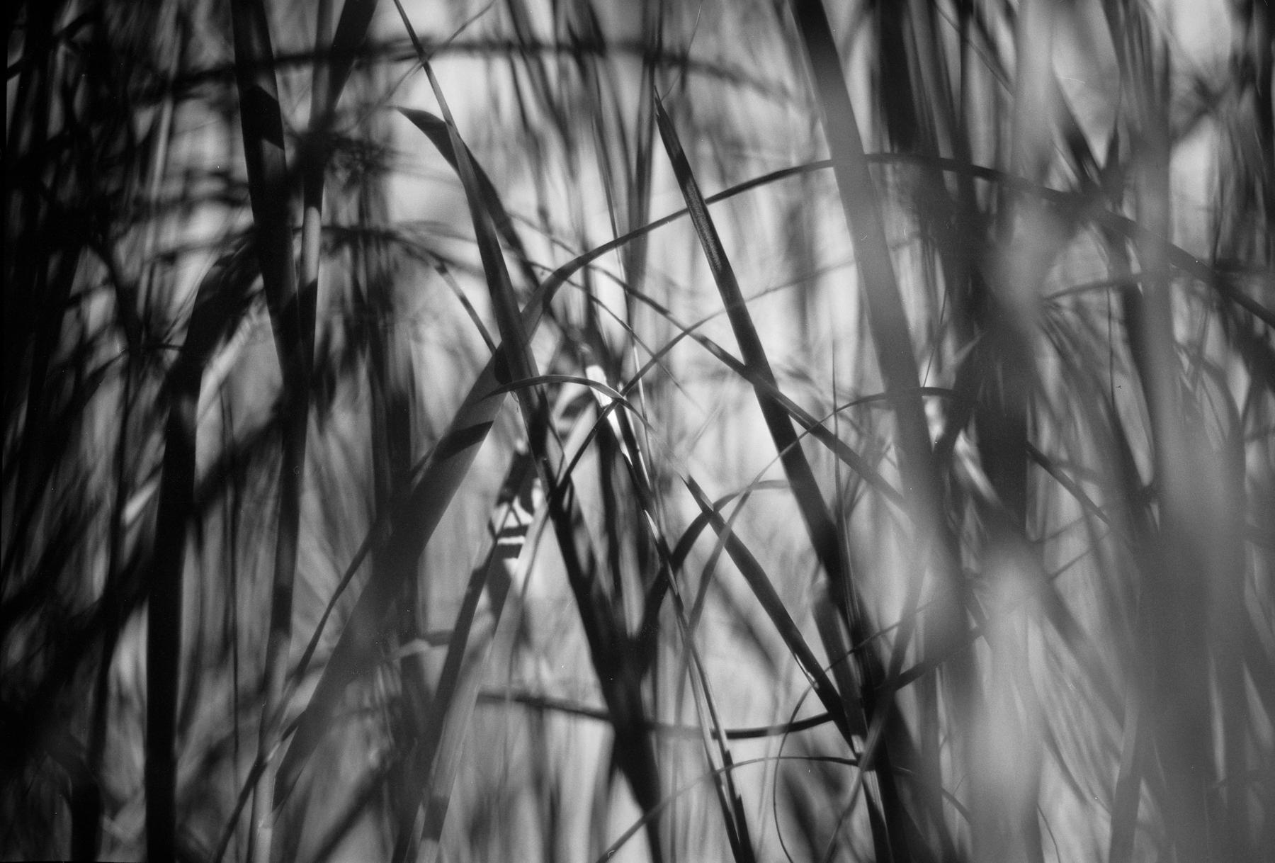 waterline_12.jpg