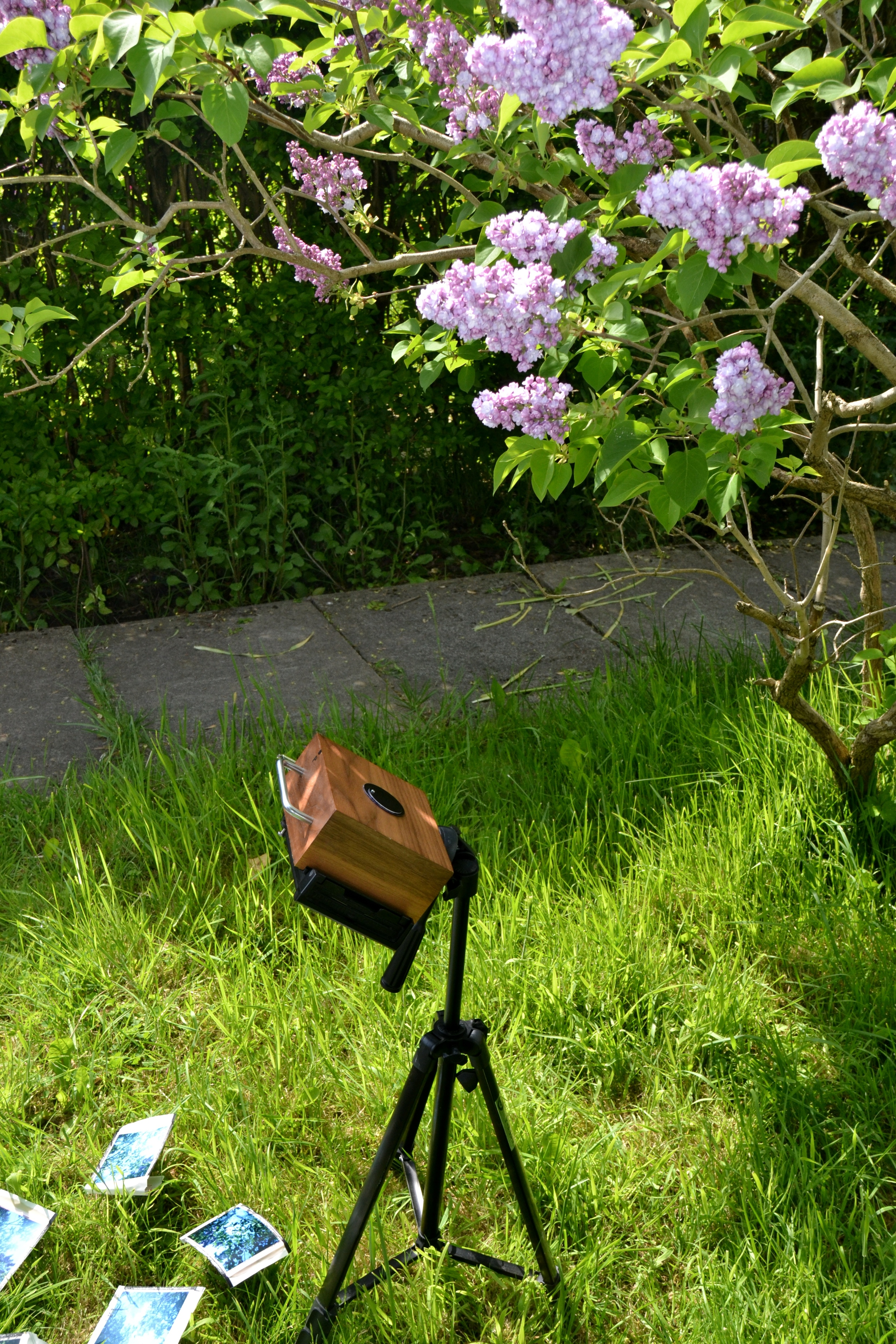 Lucy Wainwright - 5x4_pinhole_camera_polaroidback_LucyWainwright_2.JPG