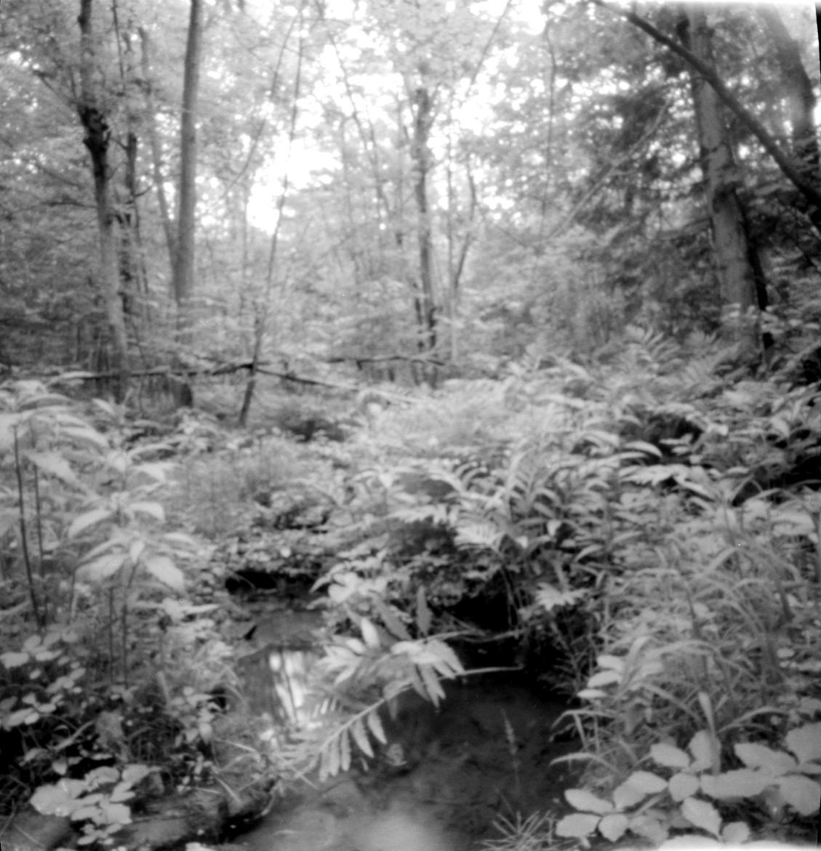 Quiet Brook | Ondu 6x12 Multiformat | KodakTri-X | Alexandra Klimova