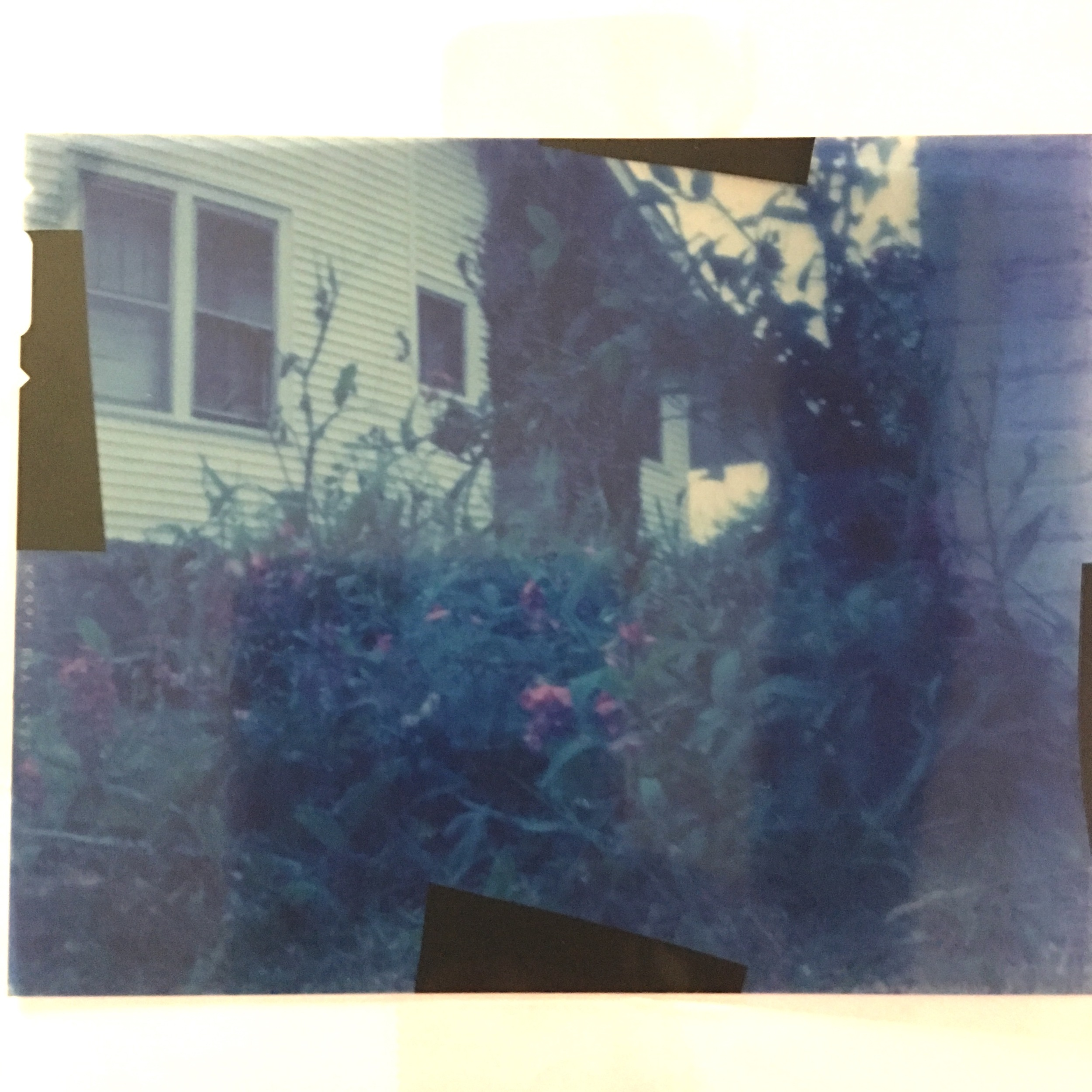 Flowers | Paint Can Pinhole | Expired Ektachrome 4x5 | Ozzy