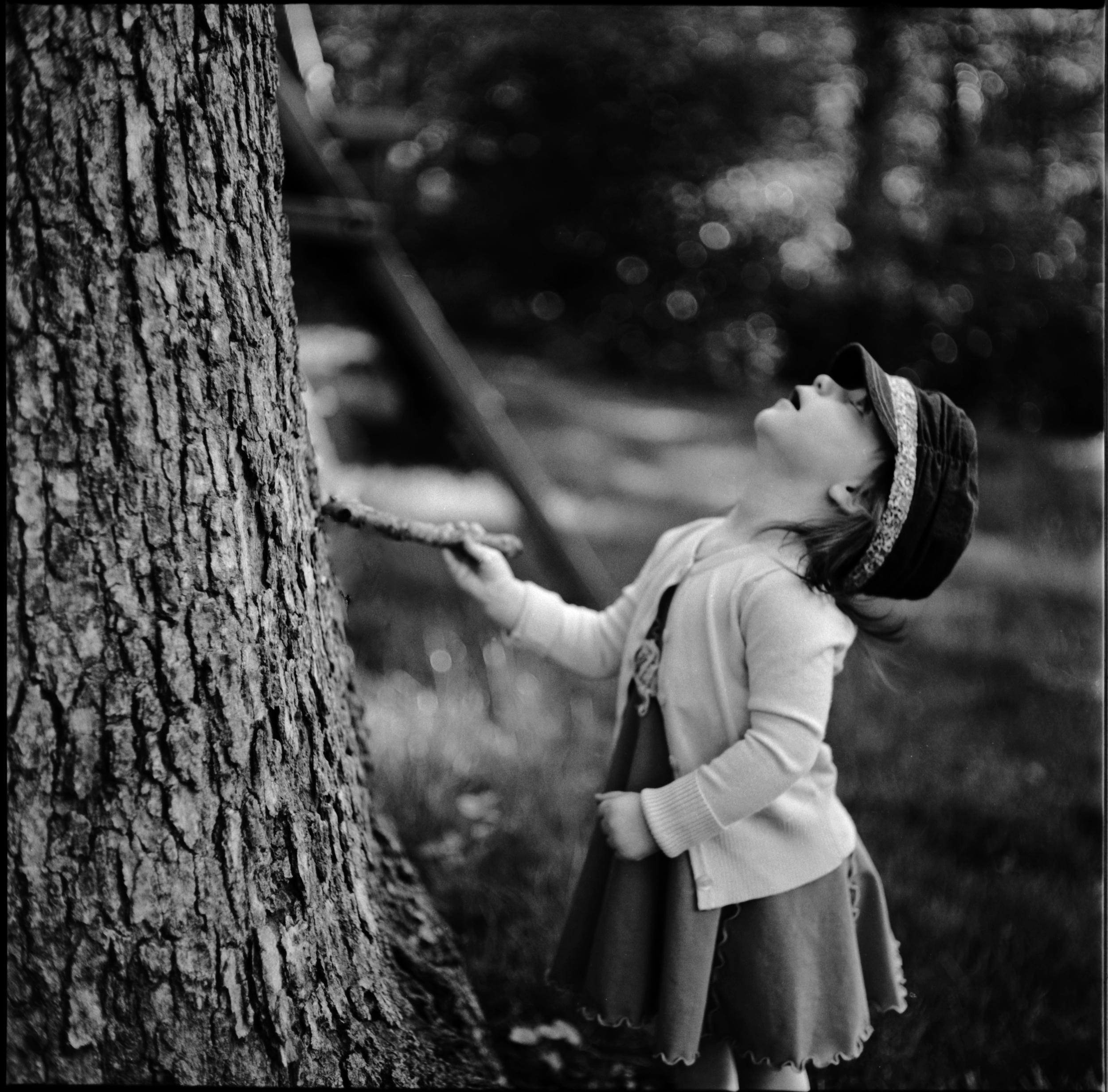 Bewildered by Wood | Mamiya C220 Kodak TMX | Ellen Goodman