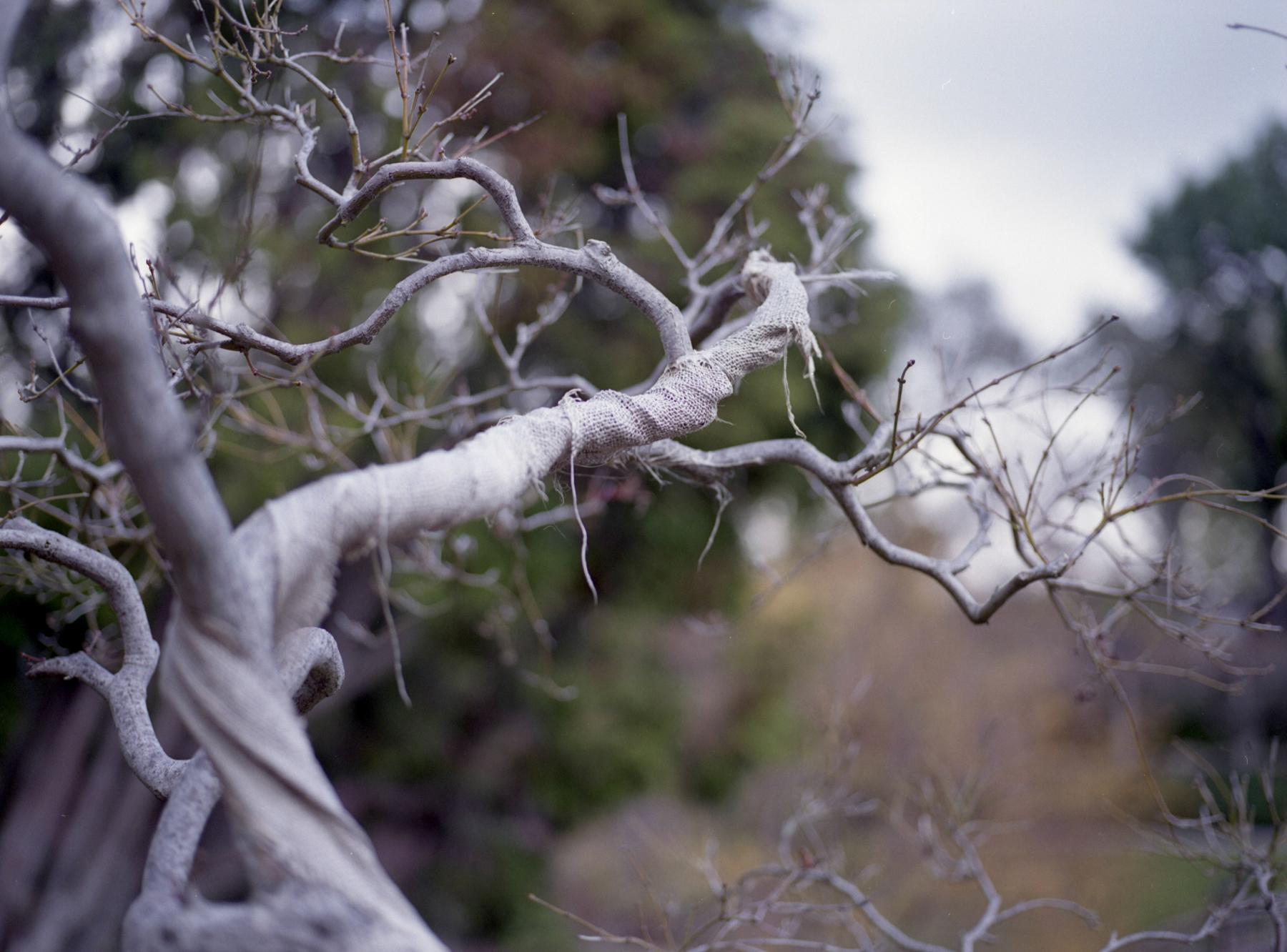 film-photographer-los-angeles-07.jpg
